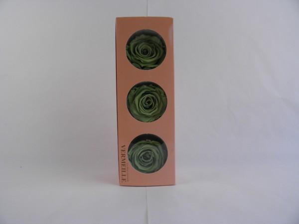 Gefrier Rose Prairie Green